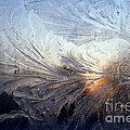 Frost On A Windowpane by Thomas R Fletcher