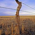 A Barbed Wire Fence Stretches by Gordon Wiltsie