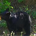 A Bear Cub by Jeff Swan