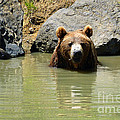 A Bear's Hot Tub by Methune Hively