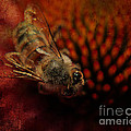 a Bee by Billie-Jo Miller