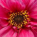 A Big Pink Flower by Mike Nellums