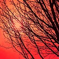 A Black Winter Tree On Red by Jennifer Holcombe