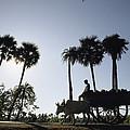 A Boy Rides On An Ox-drawn Cart by James P. Blair