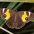 A Brightly Colored Brown And Yellow by Jason Edwards