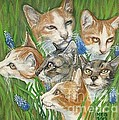 A Bunch Of Cats In The Grass by Maria Elena Gonzalez