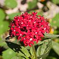 A Bunch Of Small Red Flowers by Ashish Agarwal