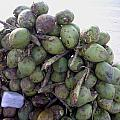A Bunch Of Tender Coconuts Being Sold By A Vendor On The Street by Ashish Agarwal