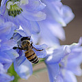 A Busy Bee by Dianne Phelps