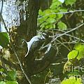 A Busy Woodpecker  by Jeff Swan