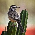 A Cactus Wren  by Saija  Lehtonen