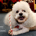 A Candycane For Puppy by Diana Haronis