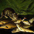 A Cat With Trout Perch And Carp On A Ledge by Stephen Elmer