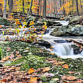 A Catoctin Autumn by JC Findley