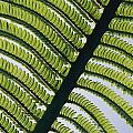 A Close View Of A Fern by George F. Mobley