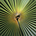 A Close View Of A Palm Frond by Ed George