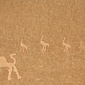 A Close View Of Ancient Petroglyphs by Taylor S. Kennedy