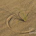 A Compass In The Sand by Susan Candelario