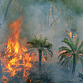 A Controlled Fire Helps Prevent by Randy Olson