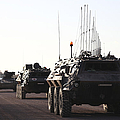 A Convoy Of German Army Tpz Fuchs by Timm Ziegenthaler