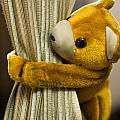A Curtain With A Cute Stuffed Toy by Ashish Agarwal