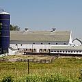 A  Dairy Farm by Wayne Stabnaw