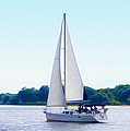 A Day Of Sailing by Bill Cannon