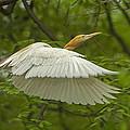 A Day With Egrets by Prasad Dharmadhikari