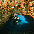 A Diver Explores A Cavern With Orange by Tim Laman