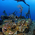 A Diver Hangs On To A Piece Of Ww2 by Steve Jones