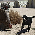 A Dog Handler Calls Over A Black by Stocktrek Images
