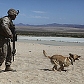 A Dog Handler Conducts Improvised by Stocktrek Images