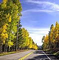 A Fall Drive  by Saija  Lehtonen