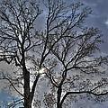 A Fall Sky by David Bearden
