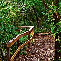 A Fall Walk by Edward Peterson
