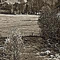 A Far Valley Sepia by Steve Harrington