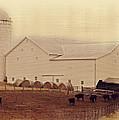 A Farm Somewhere by Kathy Jennings