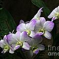 A Flight Of Orchids by Byron Varvarigos