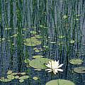 A Flowering Water Lily In Black by Skip Brown