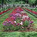 A Formal Garden by Dave Mills