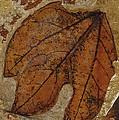 A Fossilized  Sassafras Leaf by Jonathan Blair