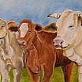A Gathering Of Cows by Genie Morgan