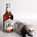 A Glass Of Fursty Ferret by Howard Kennedy