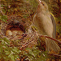 A Greenfinch At Its Nest by William Hughes