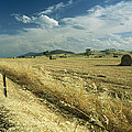 A Hay Field With Bales Sitting by Medford Taylor