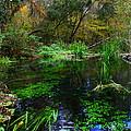 A Hint Of Fall At Ichnetucknee Springs by Barbara Bowen