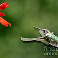 A Hummingbird With Dimension by Sue Stefanowicz