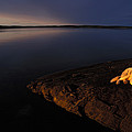 A Husky Reclines On The Shore by Nick Norman