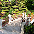 A Japanese Garden Bridge From Sun To Shade by Elaine Plesser