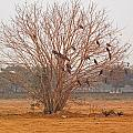A Leafless Tree That Is Home To A Large Number Of Big Birds In The Middle Of A Ground by Ashish Agarwal